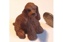 American Cocker Spaniel - Brown